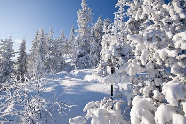 Les indispensables de l'hiver à avoir dans sa boîte de pansage