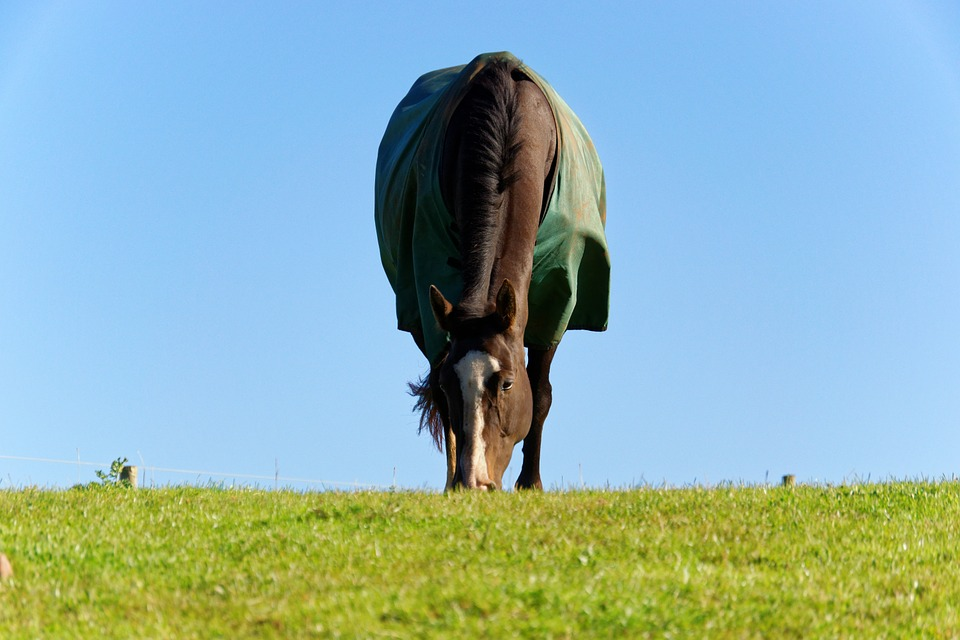 Equitation connectée : des capteurs pour les couvertures de votre cheval