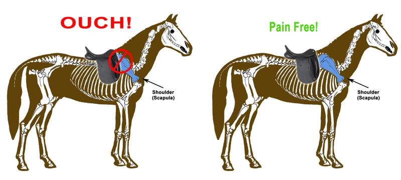 selle d'équitation cheval