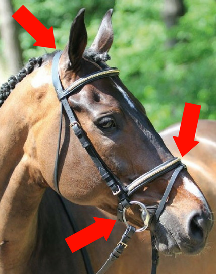 schéma filet cheval