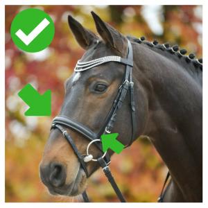 régler la muserolle du cheval