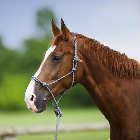 licol cheval éthologique