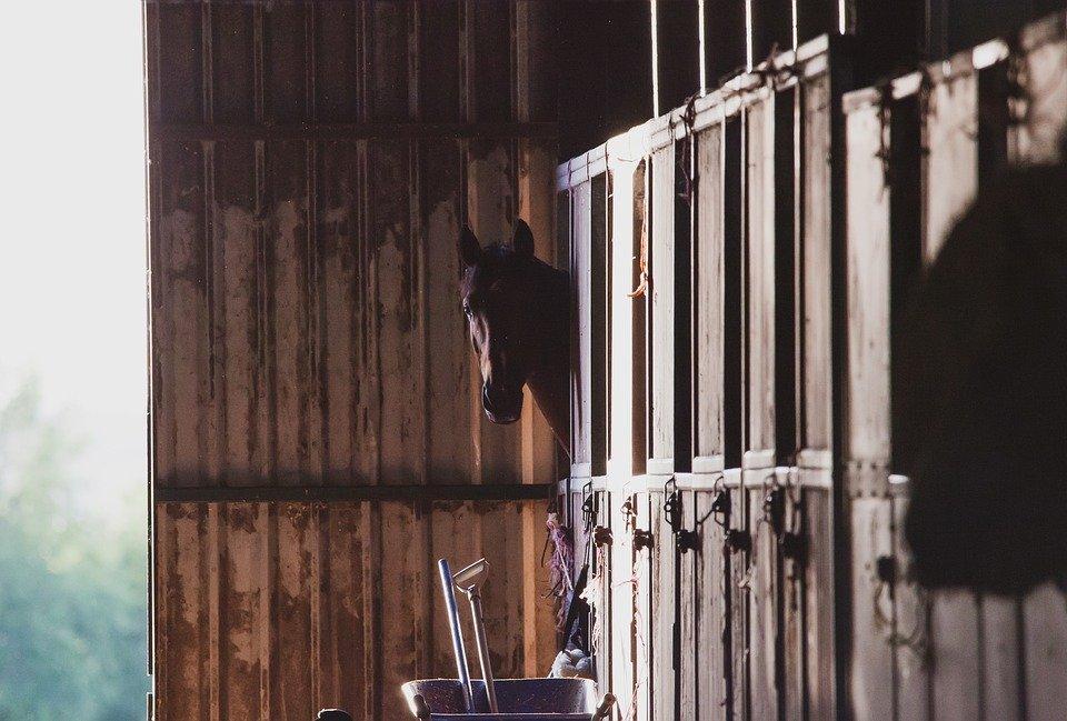 Ce qu'il ne faut surtout pas donner à manger à un cheval !