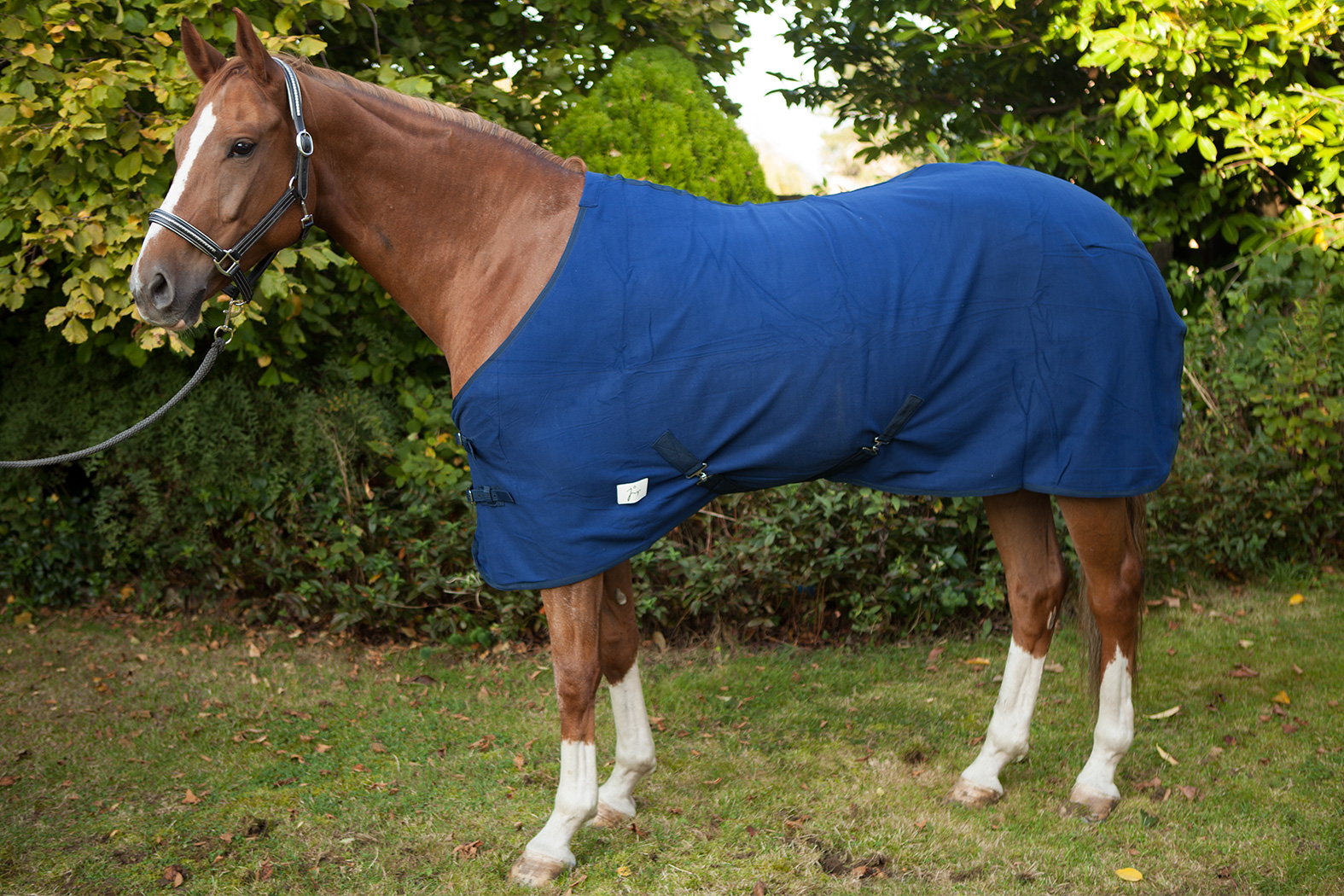 choisir les couvertures de son cheval