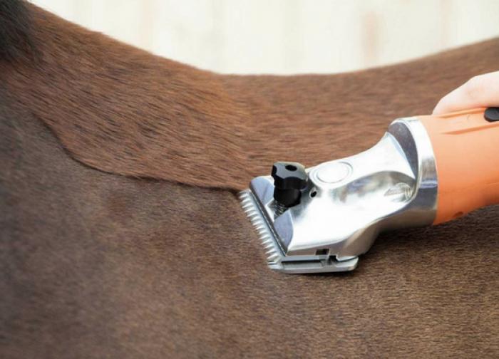 Hiver : cheval tondu ou pas tondu ?