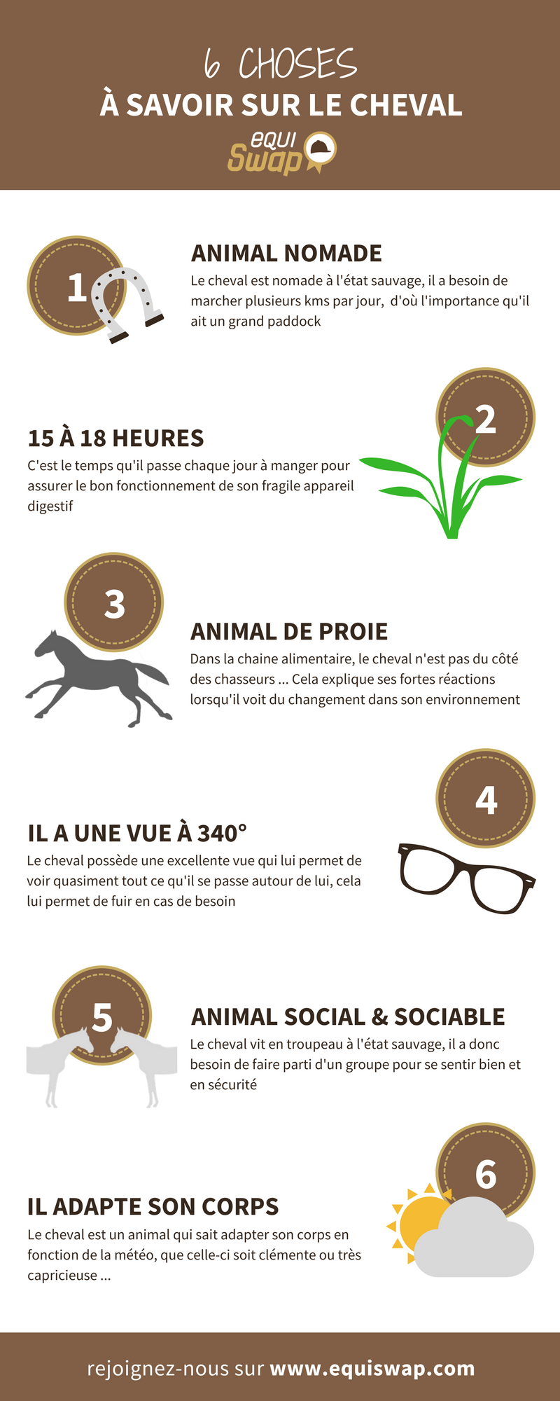 infographie cheval