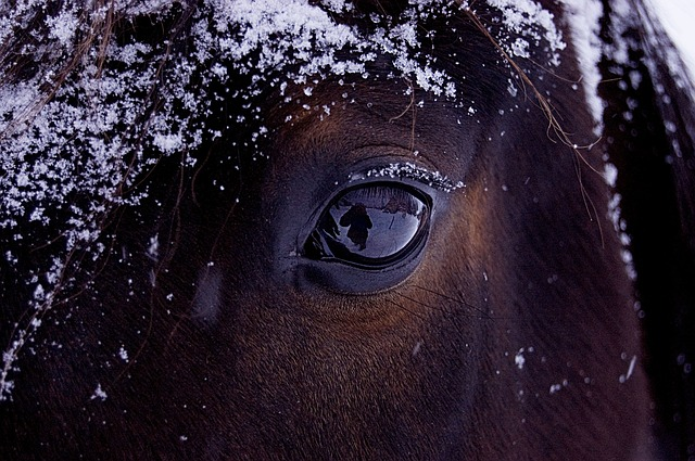 Comment choisir les couvertures de mon cheval ?