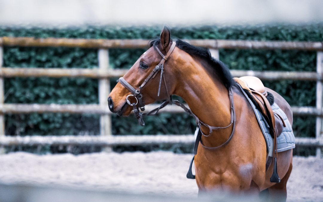 Mon cheval m'embarque : quel mors peut m'aider ?