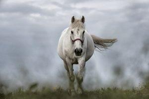 Le cheval un animal nomade