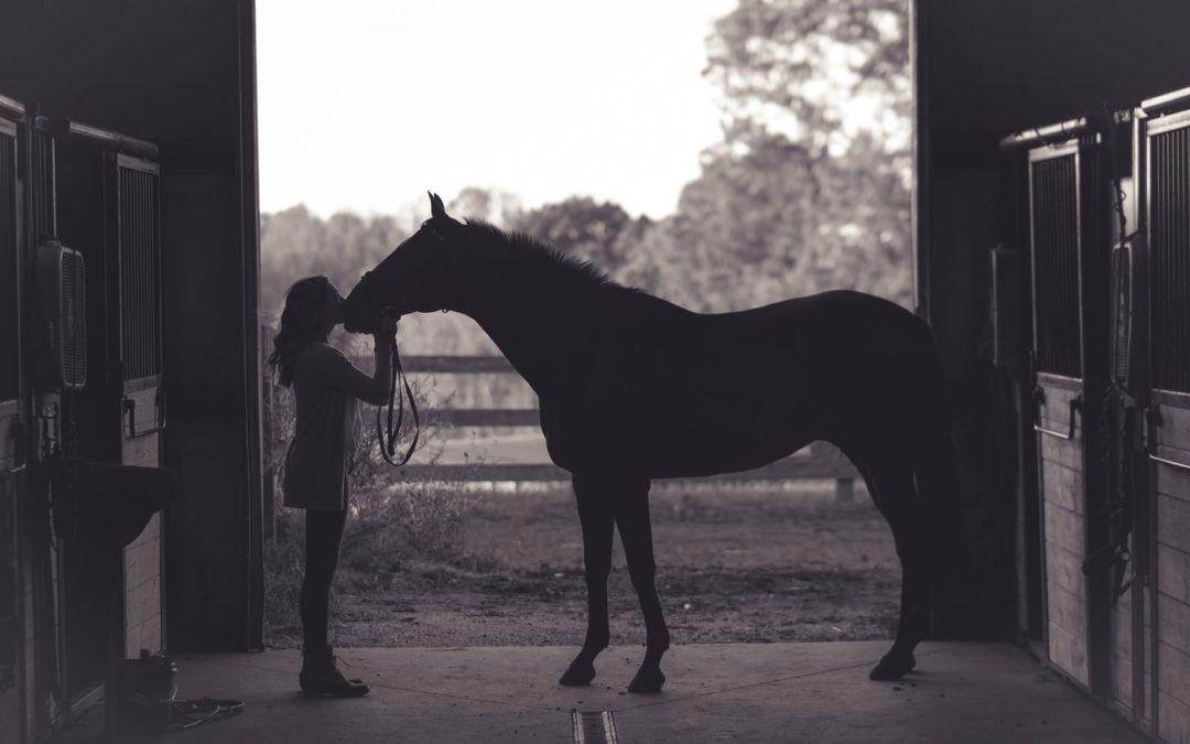 Comment créer un baume de guérison pour son cheval fait maison ?