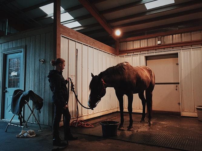 Salle de soin pour son cheval au sein de l'écurie.