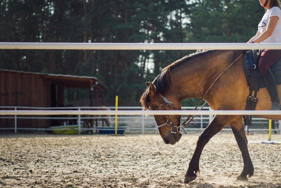 Mon cheval s'appuie : quel mors peut m'aider ?