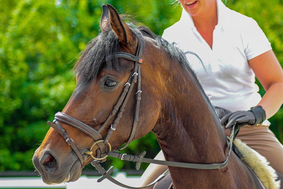 Mon cheval m'embarque : Comment réagir ?