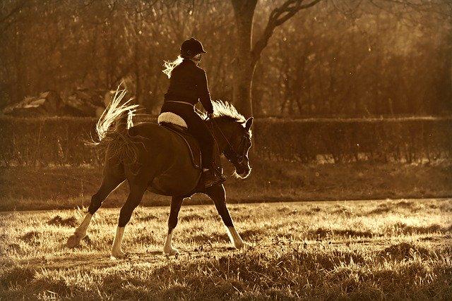 Pourquoi mon cheval m'embarque-t-il ?
