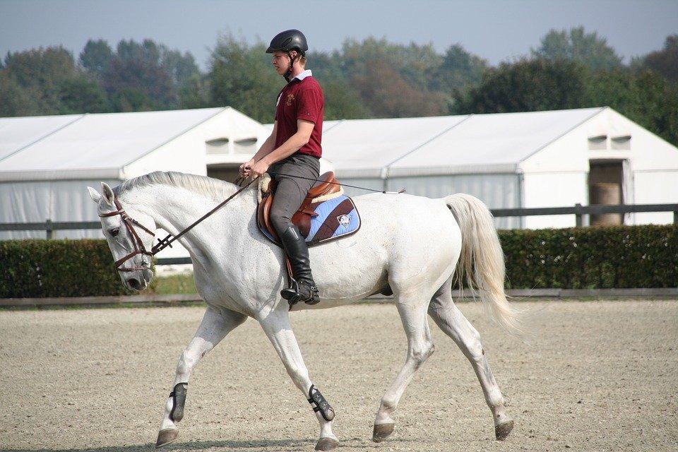 Pourquoi mon cheval a mal au dos ?