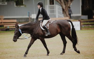 Nos conseils pour bien choisir votre amortisseur en équitation