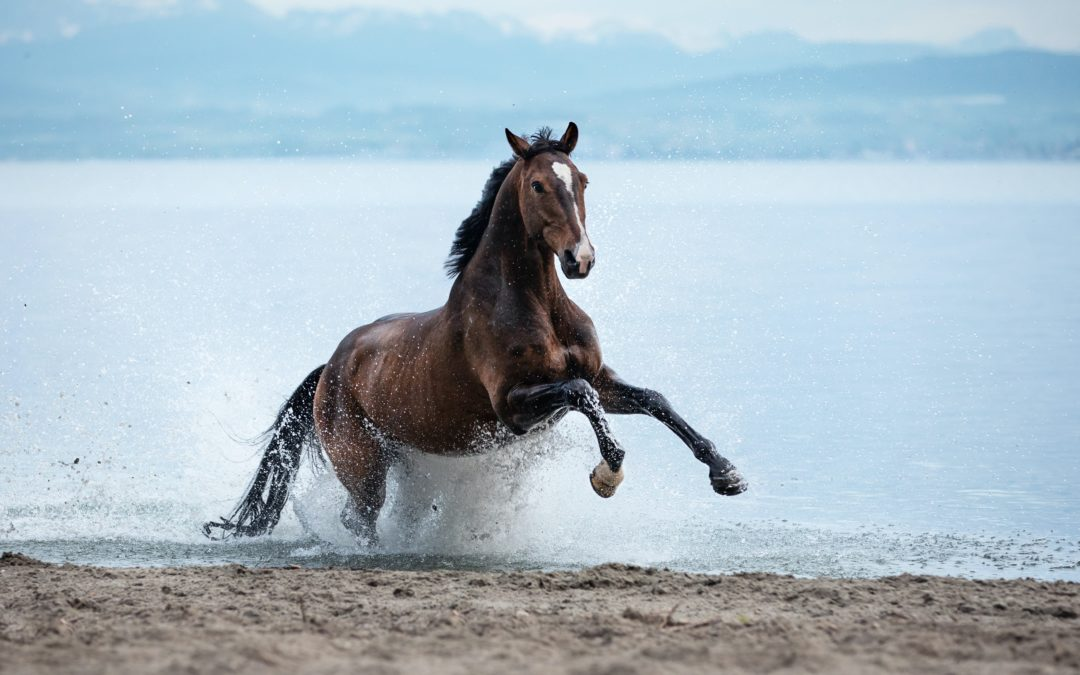 Gale de boue chez le cheval : Comment la traiter et l'éviter ?