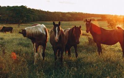 Teigne chez le cheval : comment la traiter et l'éviter ?