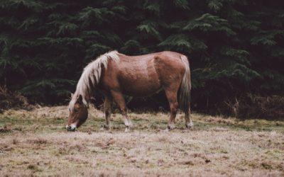 Dermite chez le cheval : comment la soigner et l'éviter ?
