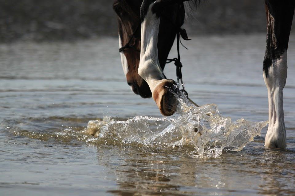 Abcès, seimes et bleimes chez le cheval : comment les traiter ?