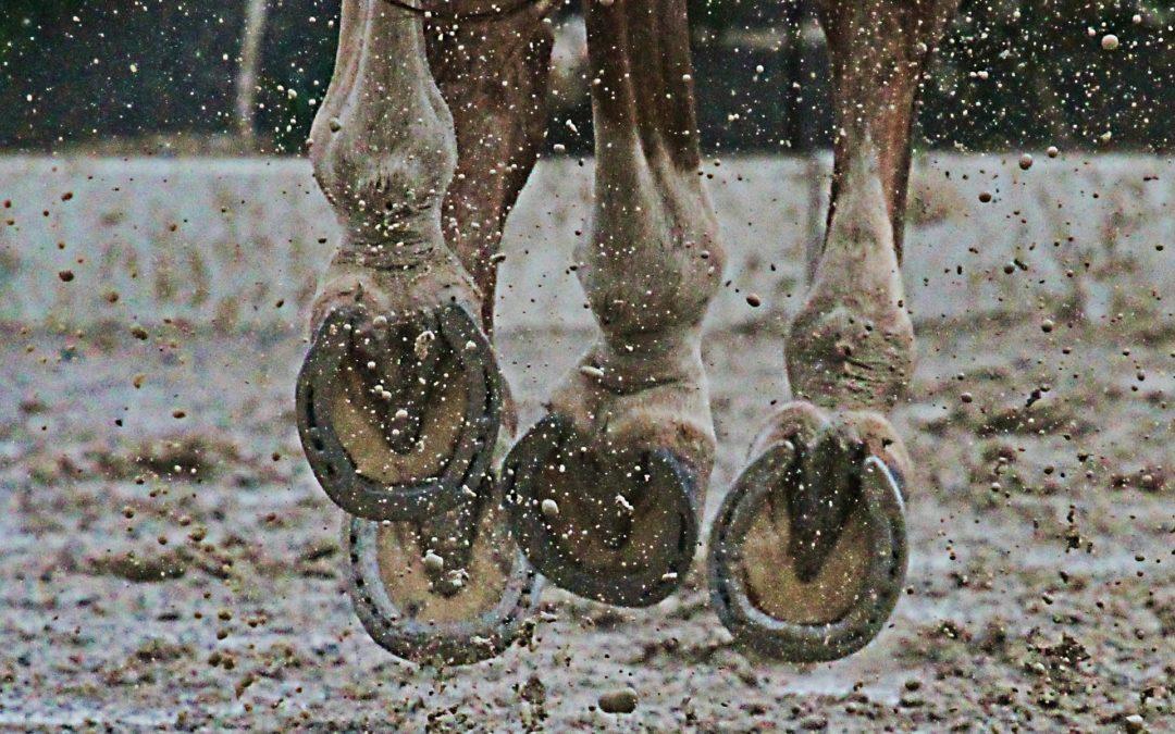 Fourchettes pourries chez le cheval : Comment les soigner ?