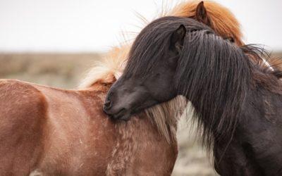 Poux et acariens chez le cheval : Comment les enlever et les éviter ?
