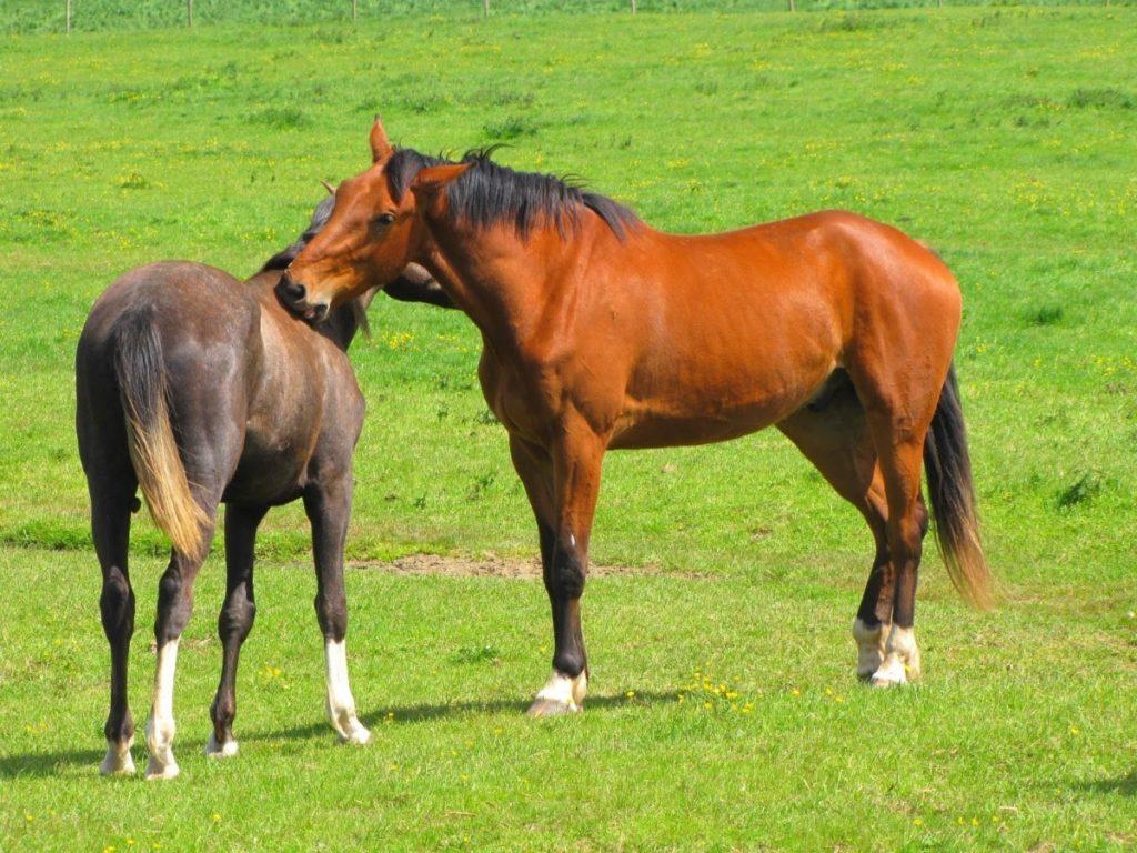 éloigner les mouches des chevaux