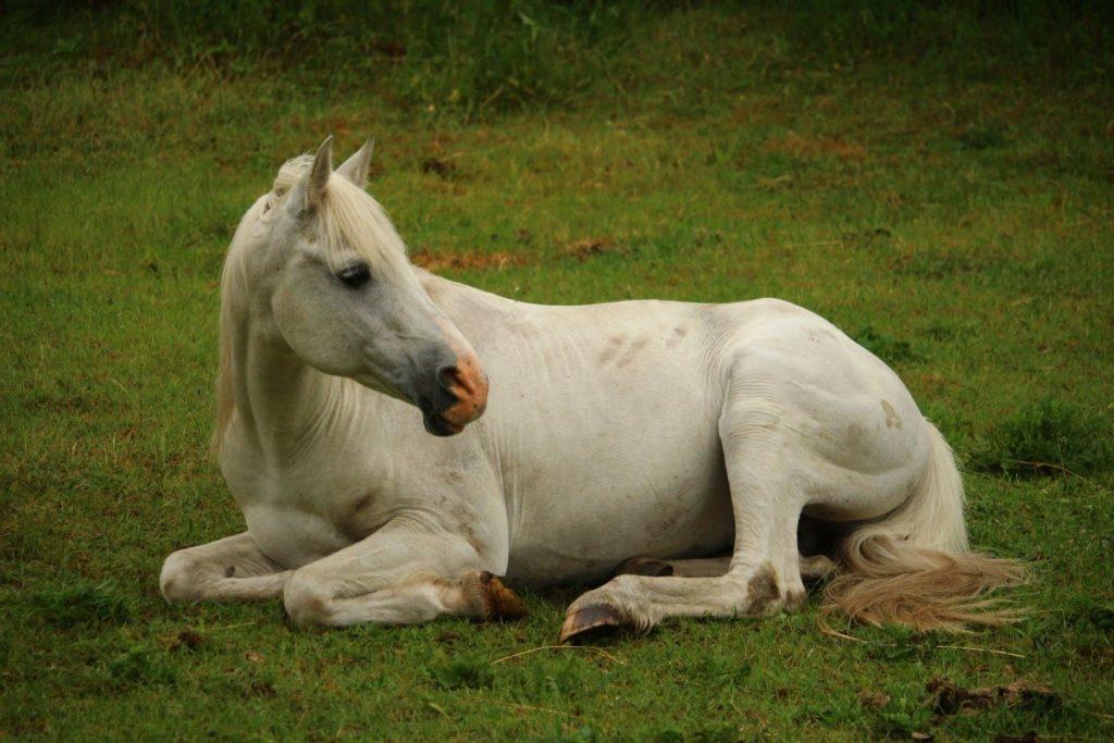 traiter les allergies du cheval