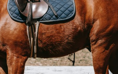 7 critères à prendre en compte pour choisir une selle d'équitation