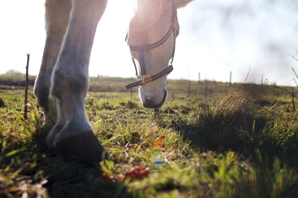 symptômes gale du cheval