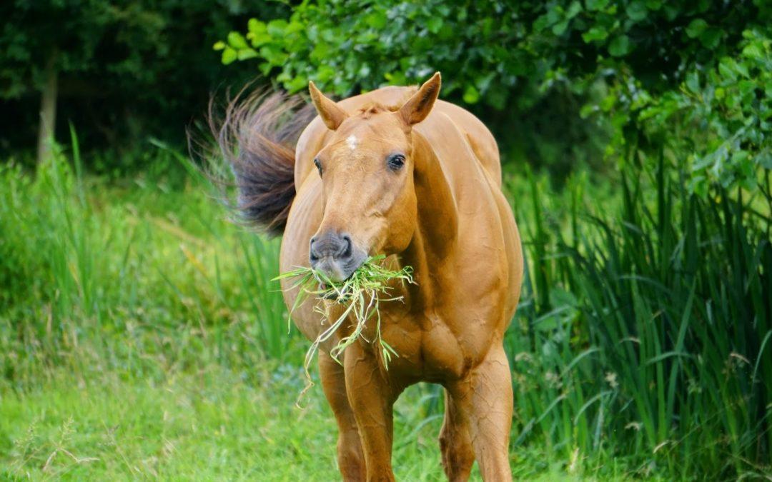 Allergies chez le cheval : quels symptômes et comment les traiter ?