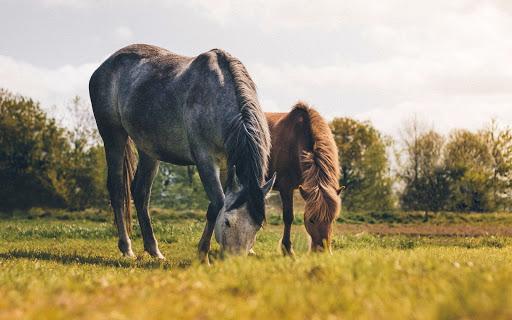 les différentes allergies du cheval