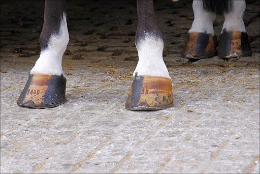 prévenir les fourchettes pourries du cheval