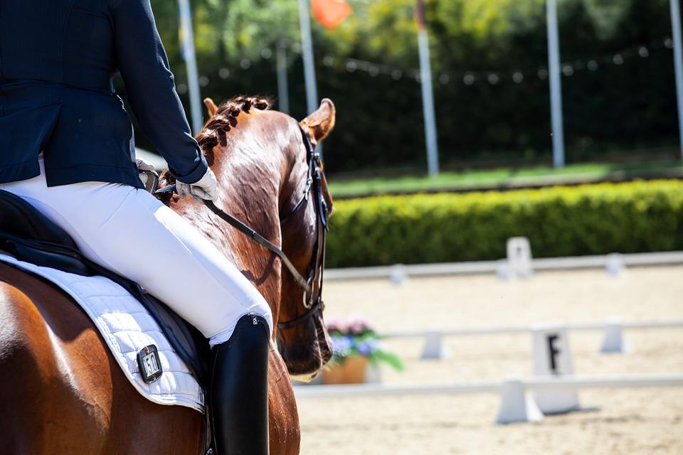 Protections cheval : Comment faire le bon choix ?