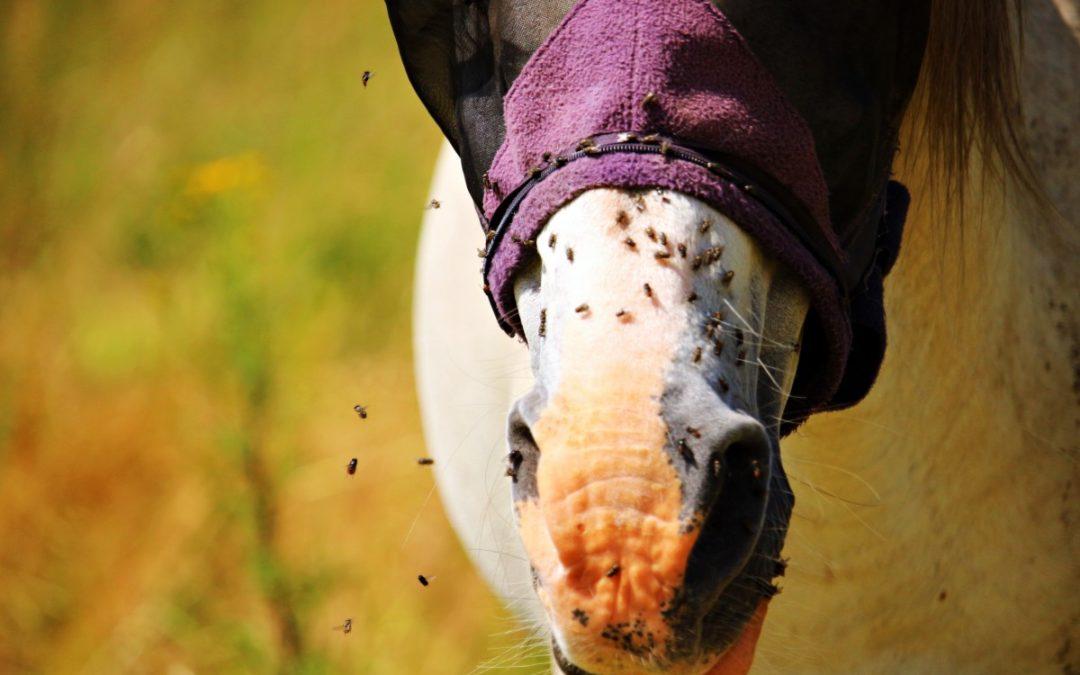 Les 8 anti-mouches naturels pour cheval