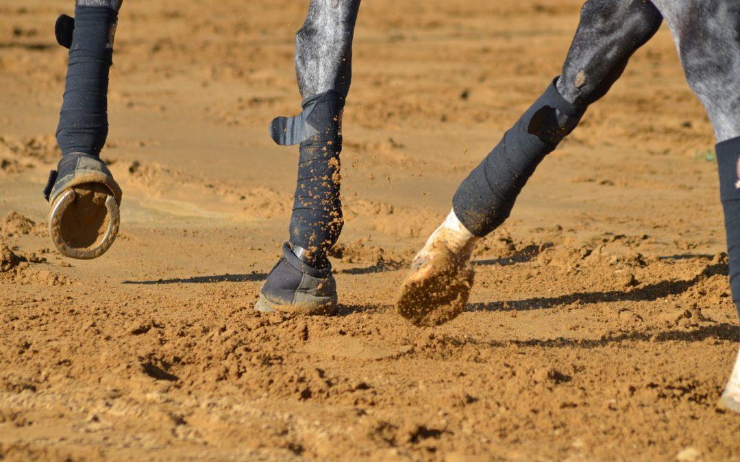 La tendinite du cheval : comment la soigner et l'éviter ?