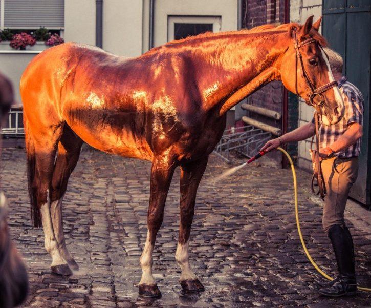 Doucher son cheval : 5 pratiques à adopter