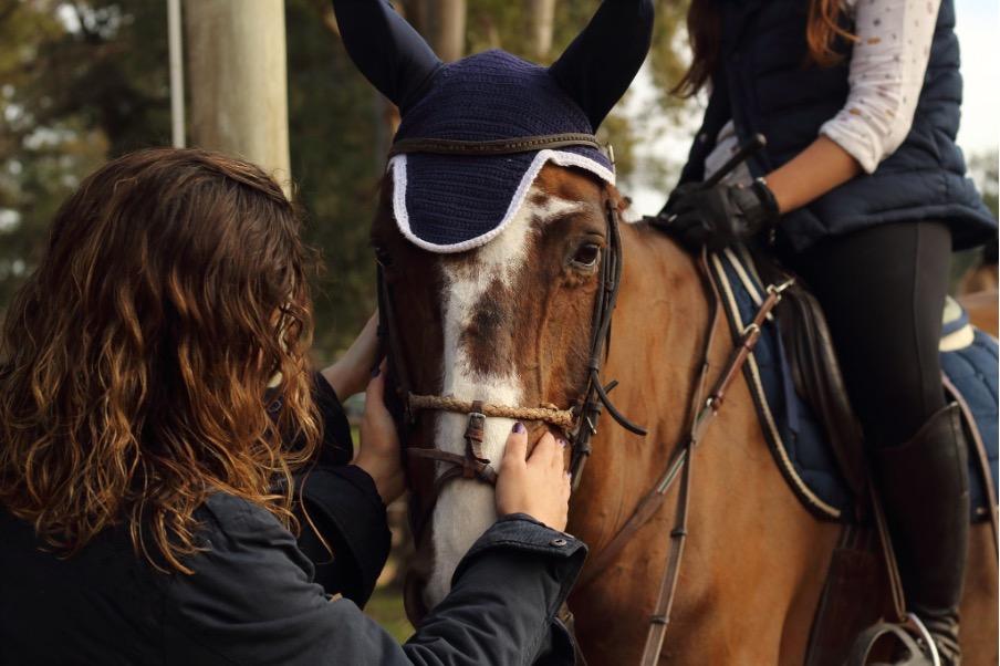 Entretenir ses tapis de selle d'équitation