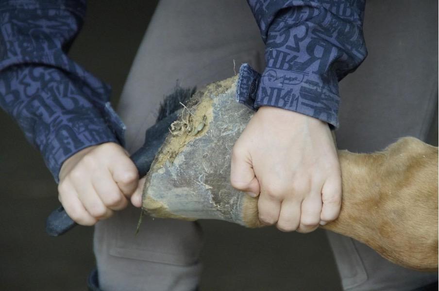 Matériel de pansage d'équitation : les indispensables