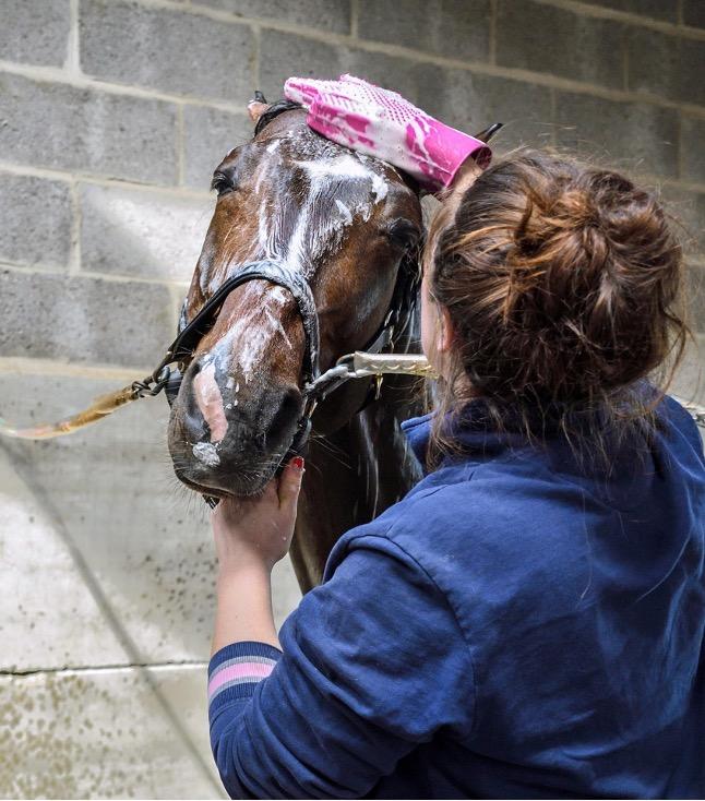 docuher un cheval avec les bons produits