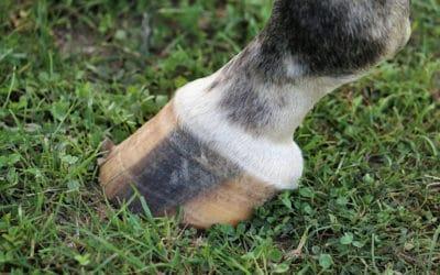 Quelle graisse choisir pour les pieds de mon cheval ?